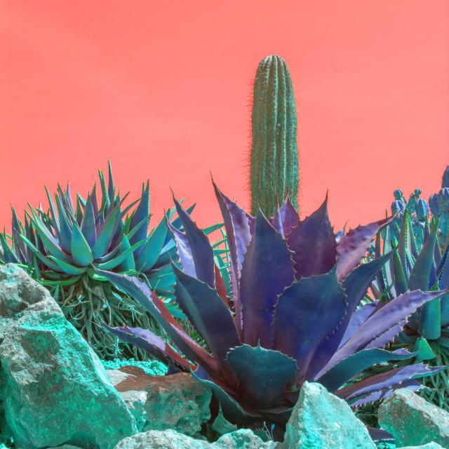 """Surrealistic abstract purple color cactus orange sky"" stock image"