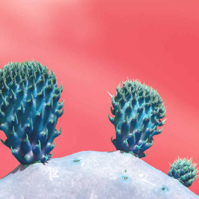 """""""Surrealistic abstract blue thorny cactus with against pink orang"""" stock image"""