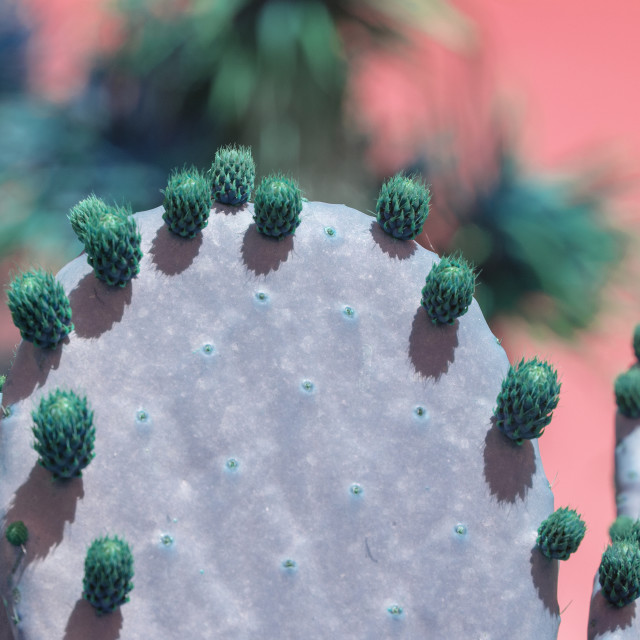 """""""Surrealistic purple and green thorny cactus with little fruits"""" stock image"""