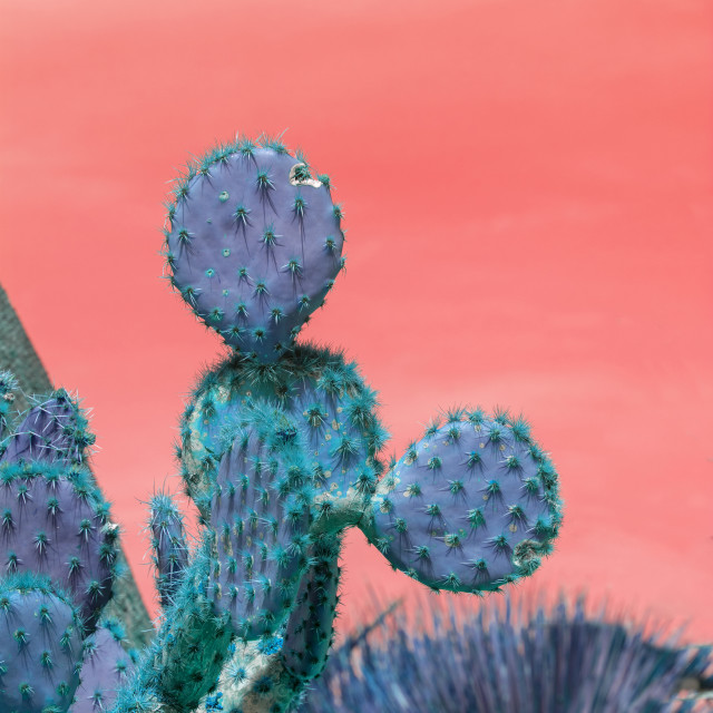 """""""Surrealistic abstract blue thorny cactus against pink orange sky"""" stock image"""