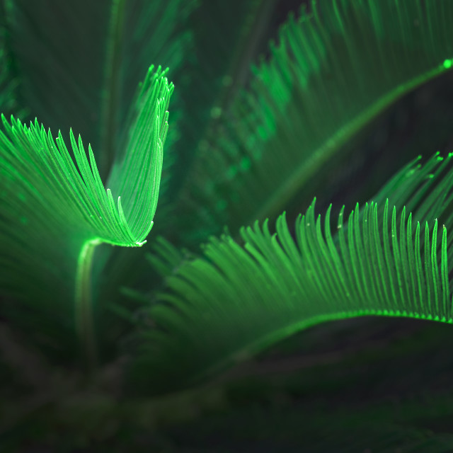 """""""Surrealistic abstract green glow Mallorca endemic fan palm"""" stock image"""