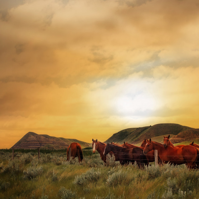 """""""Herd of horses at sunset"""" stock image"""