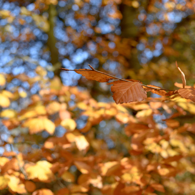"""Colourful Autumn Leaves"" stock image"