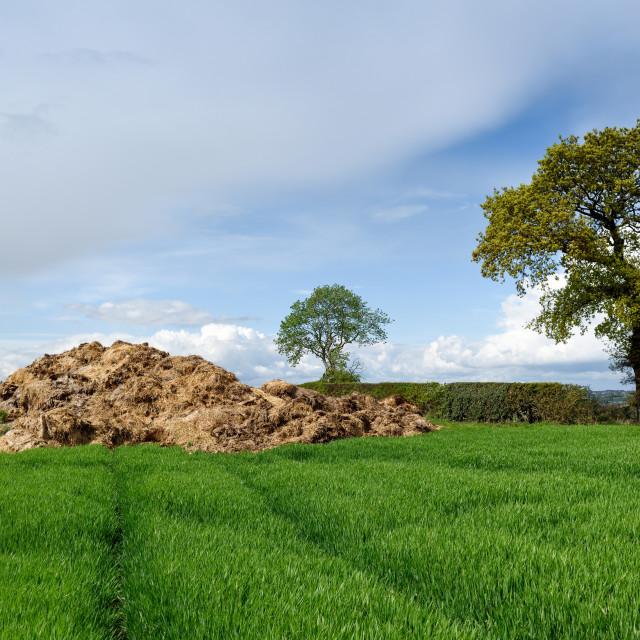 """Farming animal manure in rural fields"" stock image"