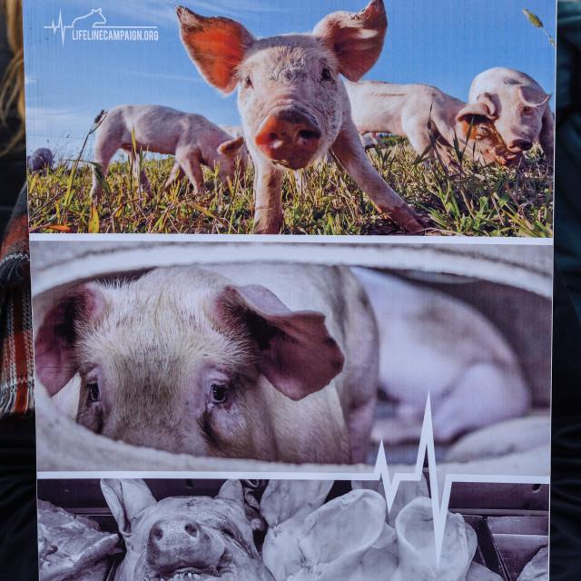 """""""Lifeline Animal Justice,Nottingham,UK."""" stock image"""