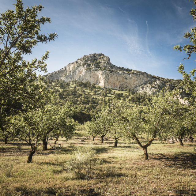 """""""Andalucian landscape with olive groves, Cordoba Province."""" stock image"""