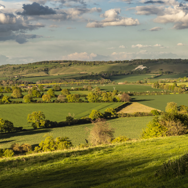 """England - Chiltern Downs"" stock image"
