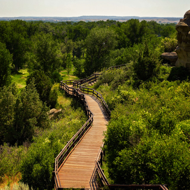 """""""A wood plank walkway surrounded by a lush green forest beside Pompeys Pillar in a summer Montana landscape"""" stock image"""