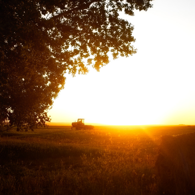 """""""A harvest swather parked under a drooping tree in an agriculture field cast with golden glow in a sunset countryside landscape"""" stock image"""