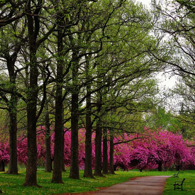 """Springtime In The Park"" stock image"