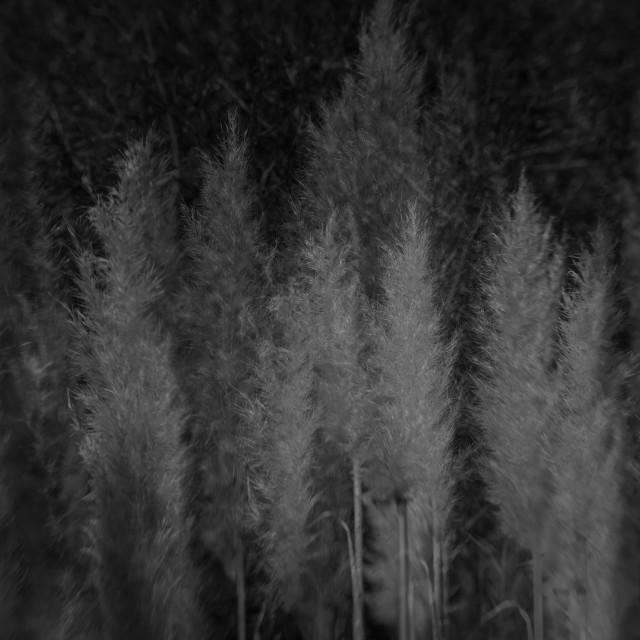 """Dark Plantation 2"" stock image"