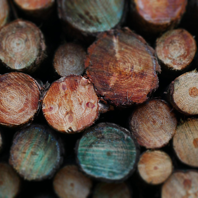 """""""Pile of timber logs"""" stock image"""