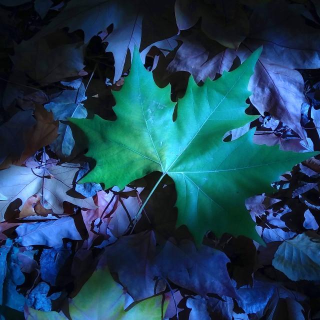 """""""The Last Leaf"""" stock image"""