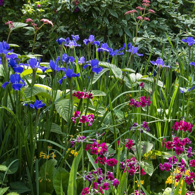 """""""Watergardens in June"""" stock image"""