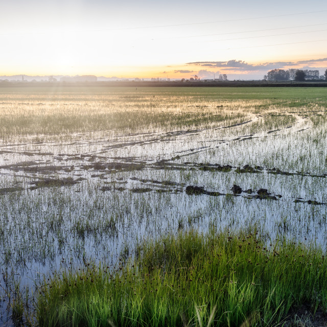 """""""Sunrise over a paddy field. Color image"""" stock image"""