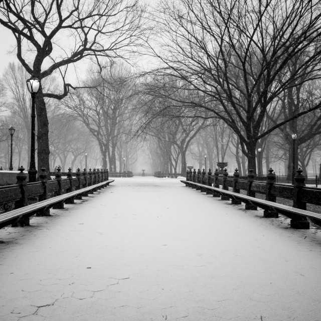 """Snow Covered Central Park"" stock image"
