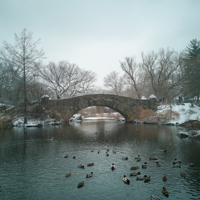 """Snowfall on Gapstow Bridge, Central Park, New York City"" stock image"