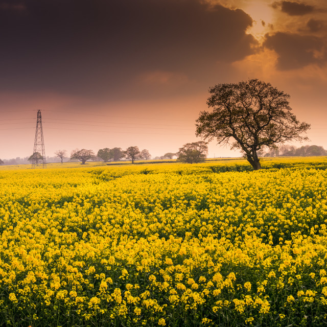 """The joy of farming"" stock image"