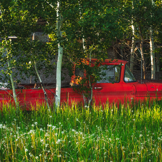 """""""An old red truck partially hidden in tall green grass and trees in a summer landscape"""" stock image"""