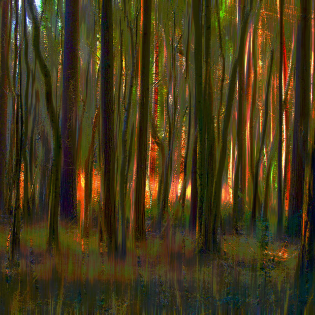 """Dark woodland Glow"" stock image"