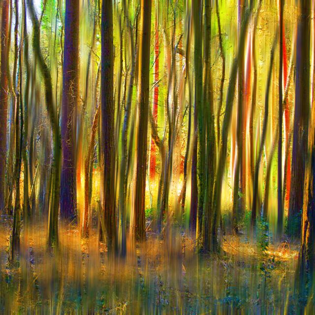 """""""Light woodland glow"""" stock image"""