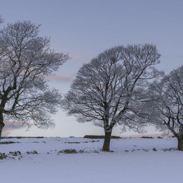 """""""Trio of Trees"""" stock image"""