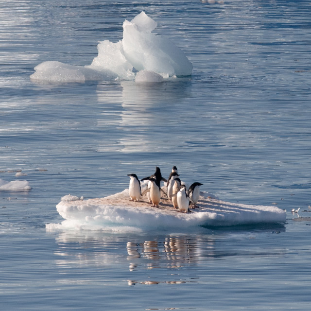 """""""Adelie Penguins crowded on an growler"""" stock image"""