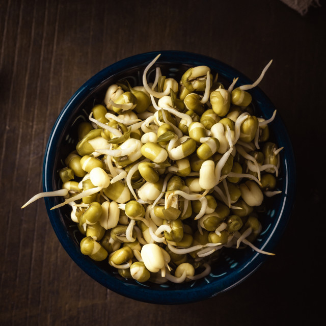 """Blue bowl full of mung bean sprouts on dark wooden board"" stock image"