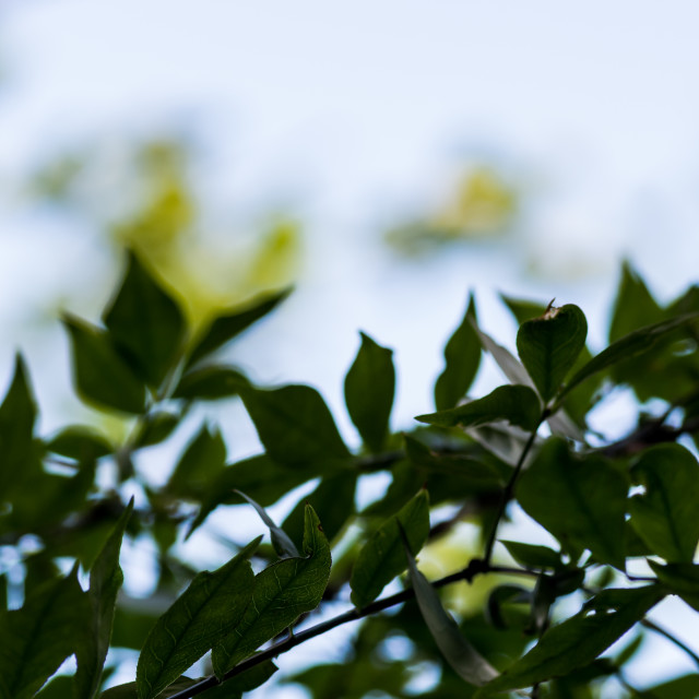 """""""plants and trees against sky"""" stock image"""