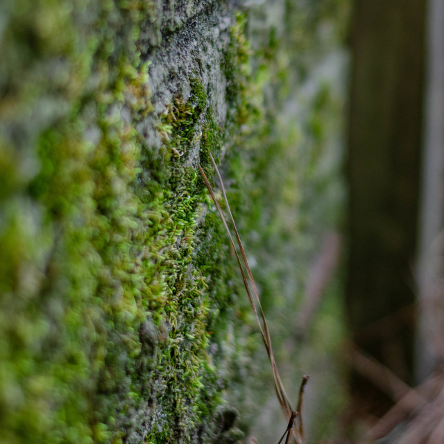 """""""Mossy structures"""" stock image"""