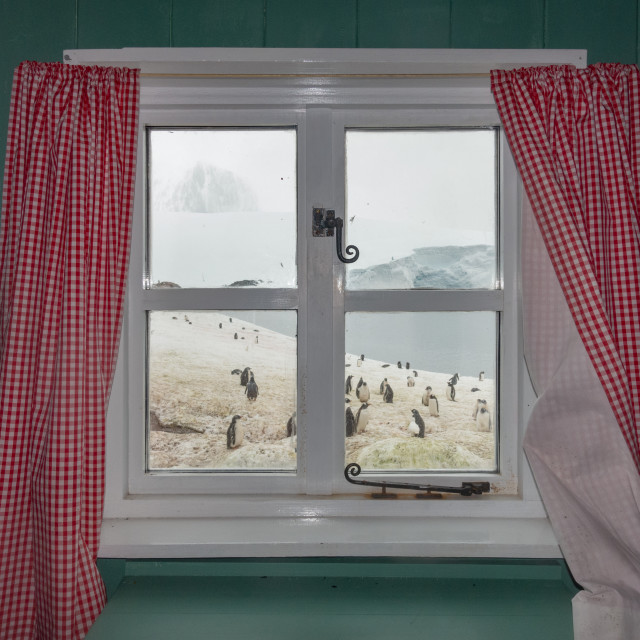 """""""The view from the kitchen, Port Lockroy"""" stock image"""