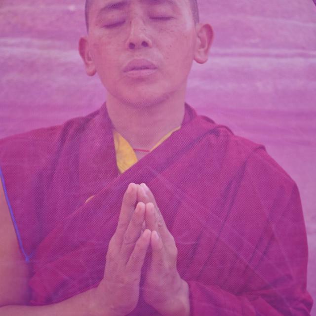 """""""Tibetan buddhist nun praying in a mini pink tent ( India)"""" stock image"""