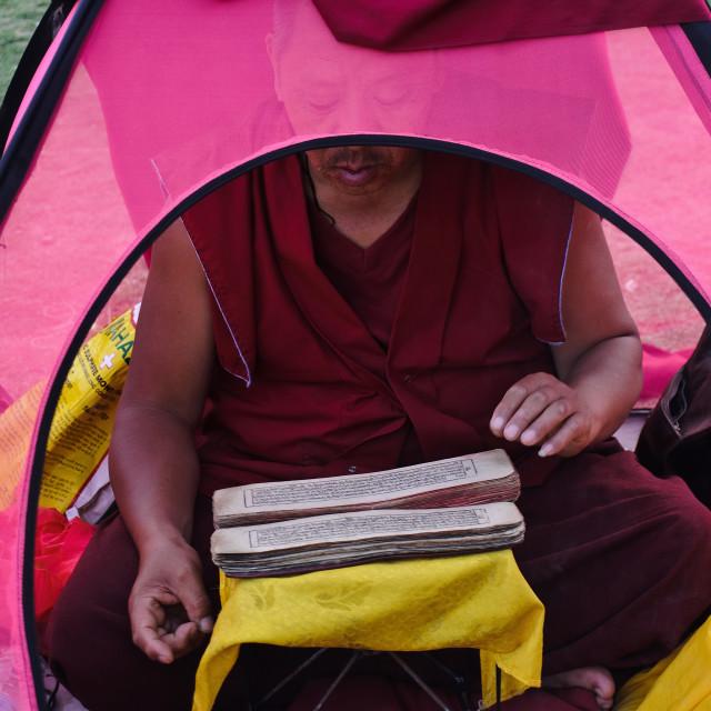 """Tibetan monk reading holy scriptures ( India)"" stock image"