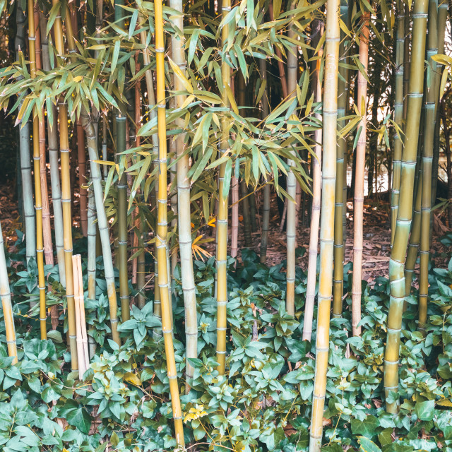 """Bamboo Forest In Lisbon, Portugal"" stock image"