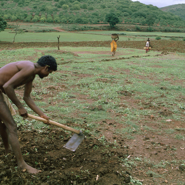 """Tribal man hoeing a field ( India)"" stock image"