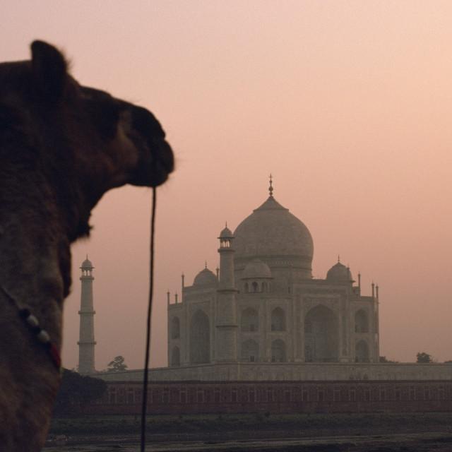 """Taj mahal ( India)"" stock image"