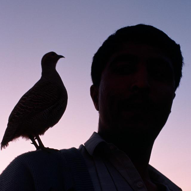 """Partridge ( Pakistan)"" stock image"