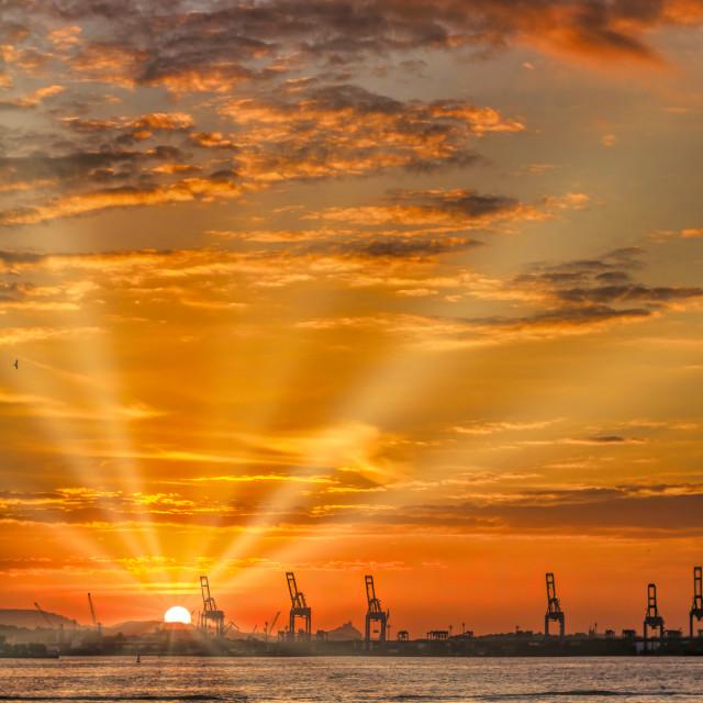 """Giraffes With Sunset"" stock image"