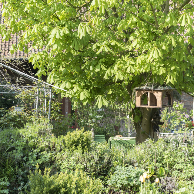 """luxuriantly green garden"" stock image"