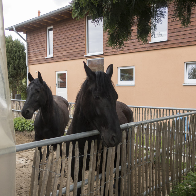 """village horses"" stock image"