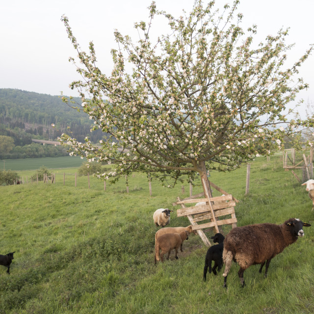 """""""Meadow Orchard"""" stock image"""