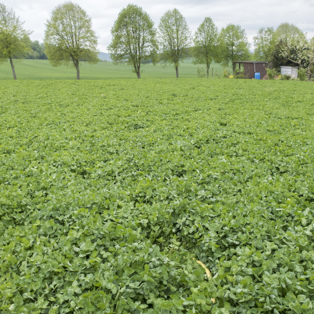 """organic vegetable fields"" stock image"