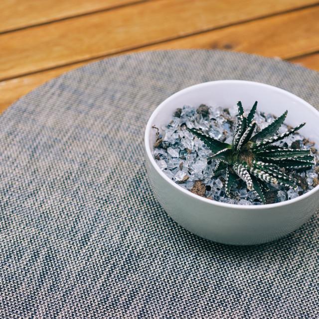 """Cactus Table Decoration"" stock image"