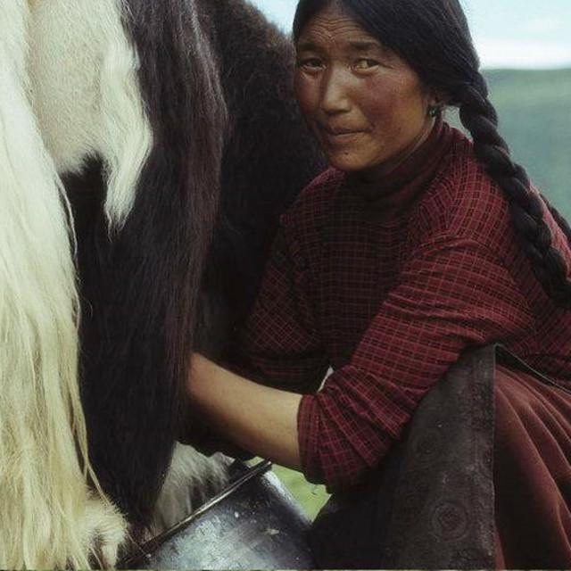 """""""Tibetan Nomads"""" stock image"""