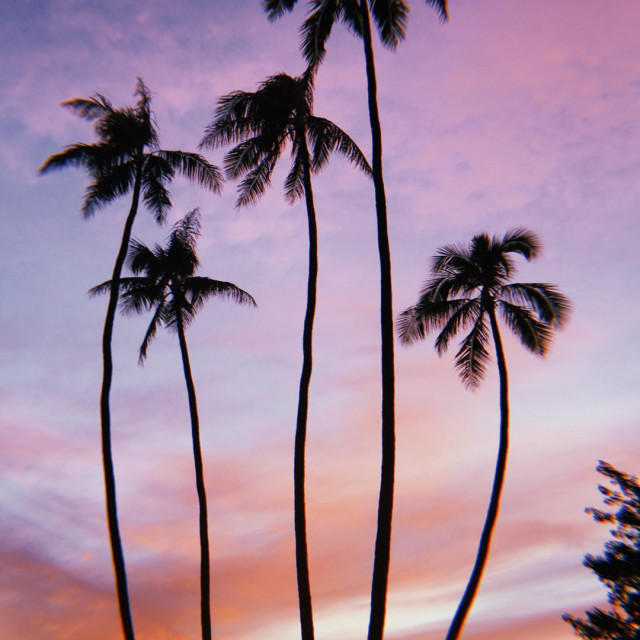 """Perfect Palms, Perfect Sunset"" stock image"