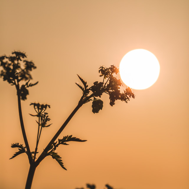 """Sunlamp"" stock image"