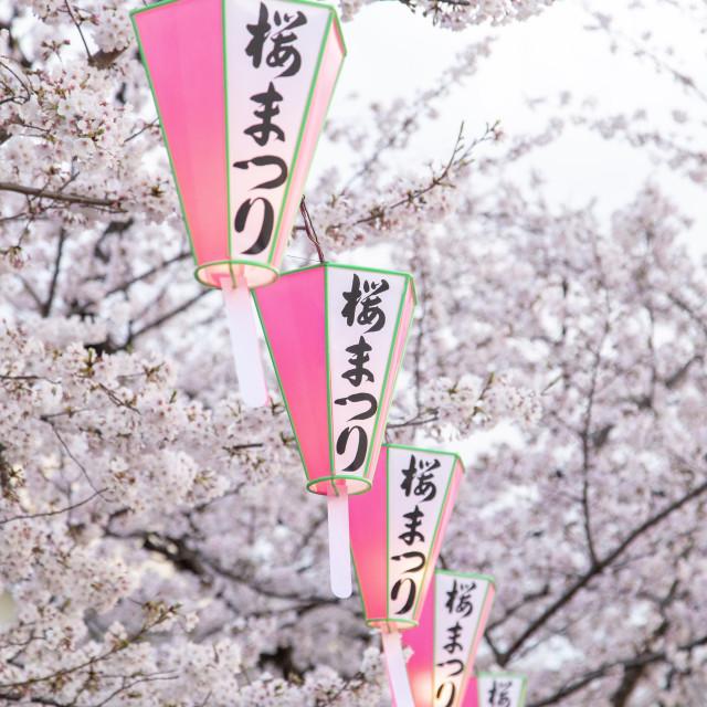"""Sakura Season Show"" stock image"