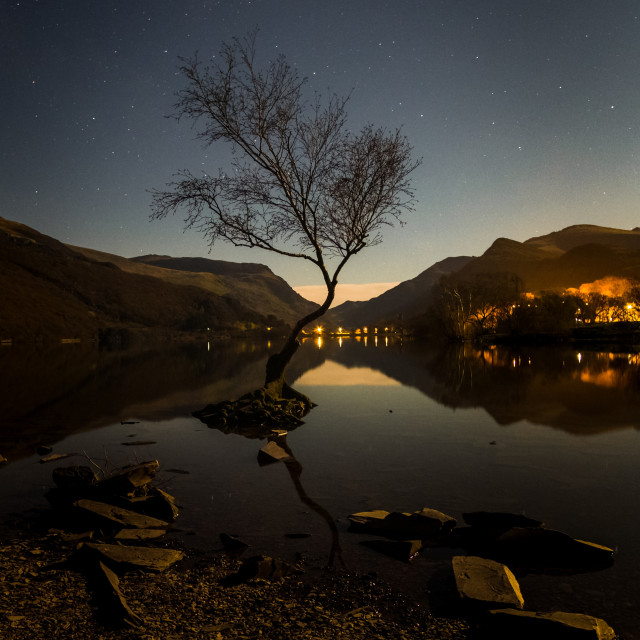 """The lone tree, Llanberis"" stock image"