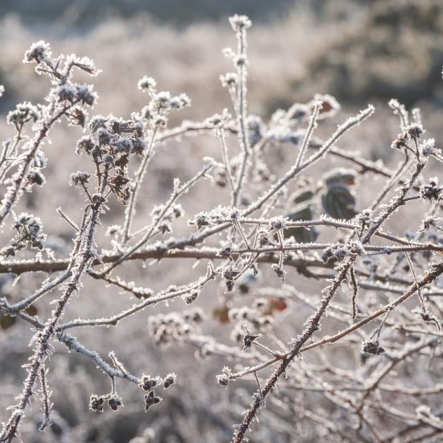 """spring sunshine on frosted vegetation"" stock image"
