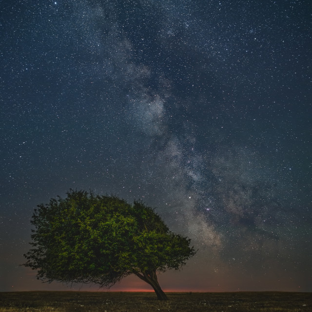 """Wind worn tree at midnight"" stock image"